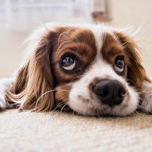 Quelles friandises donner à votre chien?